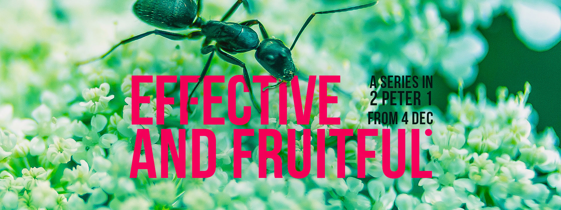 Effective & Fruitful Part 2: Self Control / Steadfast